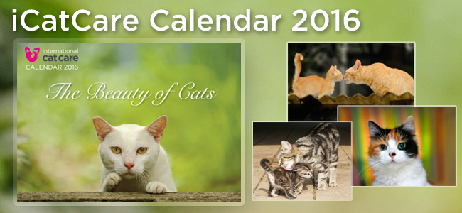 Worldwide Giveaway: Last chance for a Beauty of Cats calendar + RecentWinners