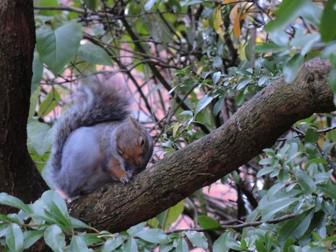 Photo of squirrel scratching